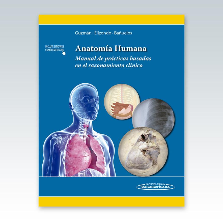 Excelente Examen De Práctica Anatomía Humana Composición - Anatomía ...